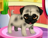 Paws to beauty 3 puppies and kittens kuty�s j�t�kok